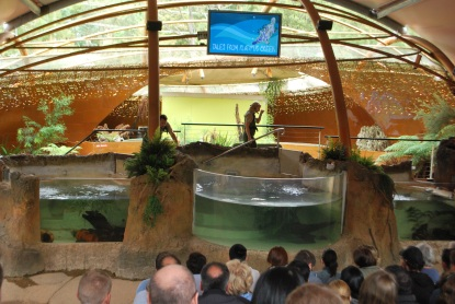 The platypus show at Healesville Sanctuary